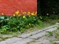 Kresten 02 Botanik_Blomster_Nexø