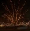 Dec01  Træ ved gylletanken-Henrik