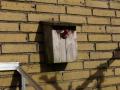 Fugl bygger rede