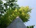 Rottefaellen05 Træ mod himmel-michael