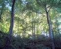Rottefaellen19 træer i modlys