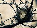 002-Kresten-kreativt sort hvidt foto