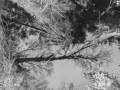 004-Kresten-kreativt sort hvidt foto